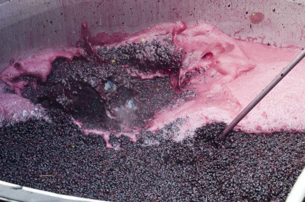 Red Wine Fermentation Process