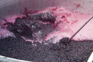 red wine cap fermentation